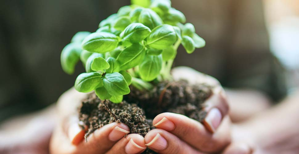 Hands holding dirt with green plant